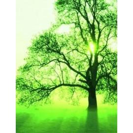 Plantation d 39 arbres en afrique compensation carbone bionoor dattes biologiques et - Plantation d arbres synonyme ...