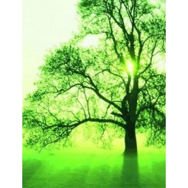 Un arbre en Algérie