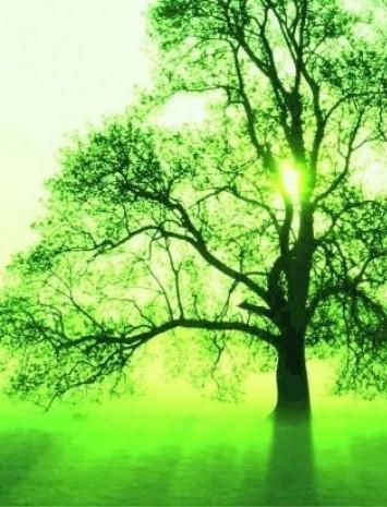 Planter un arbre en alg rie compenser vos missions de carbone - Plantation d arbres synonyme ...